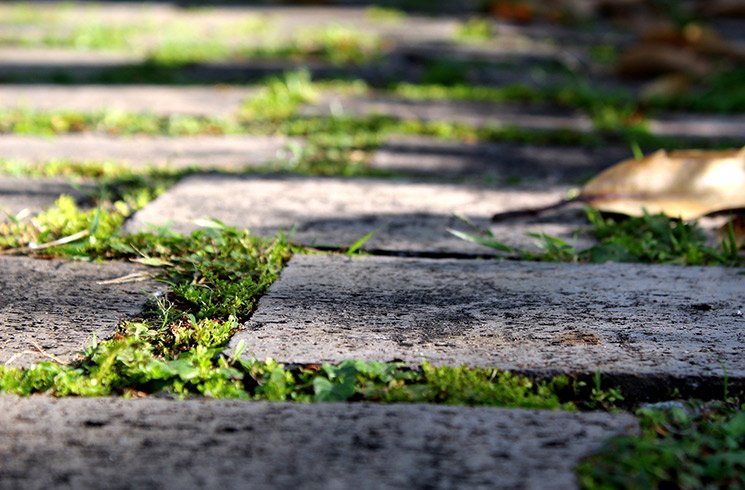 Un dallage en pierre naturelle posé sur le gazon.
